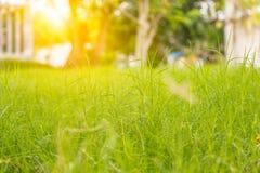 Gras mit orange Licht Stockfotografie