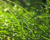 Gras mit Tau Stockfoto