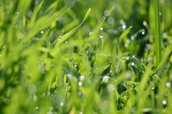 Gras mit Tau Lizenzfreies Stockfoto