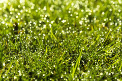 Gras mit Tau Stockfotos