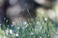 Gras mit Tautropfen Lizenzfreie Stockfotos