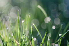Gras mit Tautropfen Stockfotos