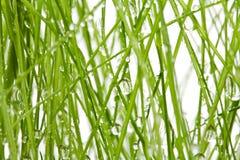 Gras mit Tropfen Stockbild