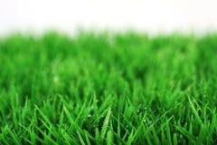 Gras mit Tropfen Stockbilder