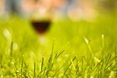 Gras mit unscharfem Hintergrund lizenzfreie stockfotografie