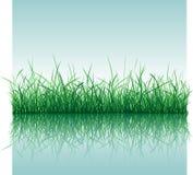 Gras mit Wasser