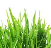 Gras mit Wassertropfen Lizenzfreie Stockfotos
