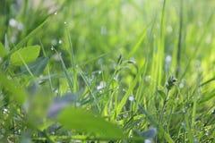 Gras mit Wassertropfen Stockbild