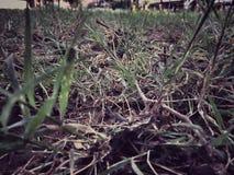 Gras mit wenig Hoffnung Stockbild
