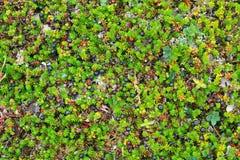 Gras, Moos und Beeren Stockbilder
