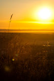 Gras morgens Sun Lizenzfreie Stockfotos