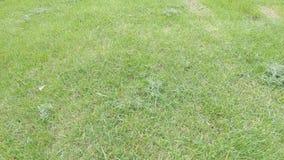 Gras na het maaien van het gazon stock videobeelden