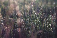 Gras na regen Stock Foto's