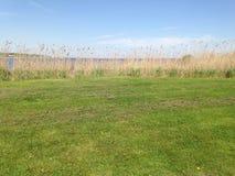 Gras naast de oceaan stock foto