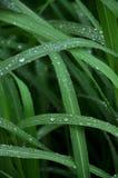 Gras nach dem Regen Tröpfchen auf dem Gras lizenzfreies stockbild