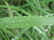 Gras nach einem Regen Lizenzfreie Stockfotos