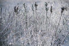 Gras nach Frost Lizenzfreies Stockbild