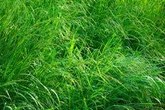 Gras nach Gewitter stockfoto