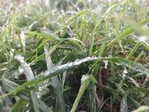 Gras nach Regen Stockfoto
