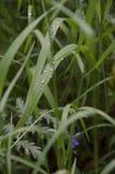 Gras nach Regen Lizenzfreies Stockbild