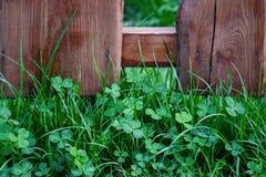 Gras nahe einem Zaun Lizenzfreie Stockfotos