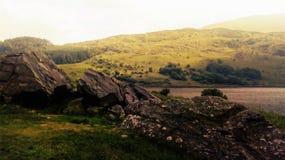 Gras, Natur in einem Park in Wales stockfoto