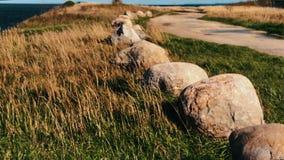 Gras onder wind en rotsen Gras onder wind en rotsen Scène 4 stock video
