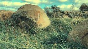 Gras onder wind en rotsen Gras onder wind en rotsen Scène 4 stock footage