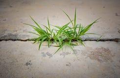 Gras op beton Royalty-vrije Stock Foto's
