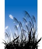 Gras op blauwe hemel Stock Afbeelding
