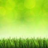Gras op de groene achtergrond Stock Fotografie