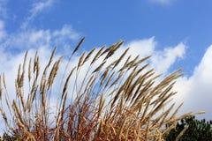 Gras op de grond Stock Foto's