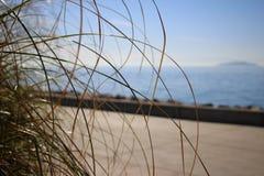 Gras op de overzeese kust Royalty-vrije Stock Foto's