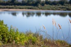 Gras op de rivierbank royalty-vrije stock afbeelding