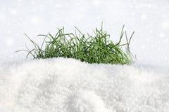 Gras op de sneeuw royalty-vrije stock afbeeldingen