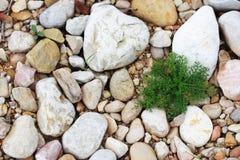 Gras op de steen Stock Afbeelding