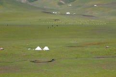 Gras op de tent en de troep Stock Foto