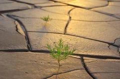 Gras op droge grond Stock Fotografie