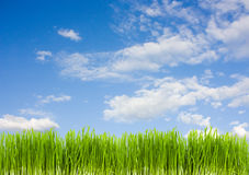Gras op een achtergrond van blauwe hemel Royalty-vrije Stock Foto's
