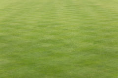 Gras op een groen kegelen Royalty-vrije Stock Foto