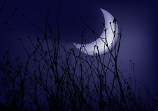 Gras op een nightly hemel als achtergrond Royalty-vrije Stock Fotografie