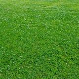 Gras op een open plek Stock Afbeelding