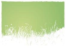 Gras op groene achtergrond. Stock Afbeelding