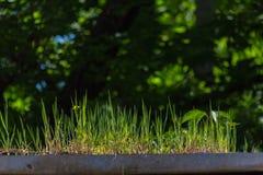 Gras op het dak Stock Afbeeldingen