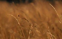 Gras op Heuvel Stock Foto's