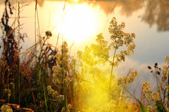 Gras op rivieroever bij dageraad Royalty-vrije Stock Afbeeldingen