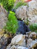 Gras op Rotsen dichtbij een Bergbeek Royalty-vrije Stock Foto