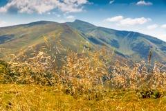 Gras op weide in Karpatische bergen royalty-vrije stock afbeeldingen