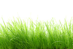 Gras op witte achtergrond Royalty-vrije Stock Foto