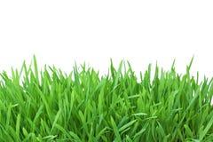 Gras op witte achtergrond wordt geïsoleerd die Royalty-vrije Stock Foto's